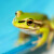 vecteezy_close-up-of-a-tiny-green-bell-frog-in-sharp-focus_1249202